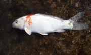 yosioの釣りブログ