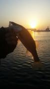 スガちゃん釣り迷人のブログ
