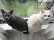 猫兄弟とスポット