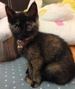 サビ猫miaの北九州ランチパスポート日誌
