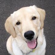 犬のジュリー
