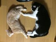 ネコにプラモに趣味三昧