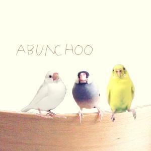 文鳥、文鳥、ABUNCHOO