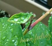 葉音 - haon feeling