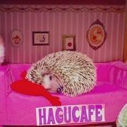 HAGU CAFE 新宿本店 店長のブログ
