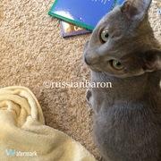 *猫とLucie*russianbaron's diary