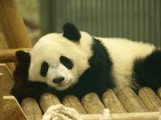 熊猫さんのプロフィール