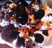シャディー保護猫ハウス 16年に亘る動物愛護活動