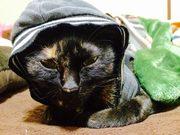 黒猫あさひと僕らの日常