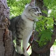 猫とふたり暮らし〜evaとaiaiの日常〜