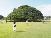 夫婦で行く夢の島Hawaii〜定番のハワイ〜