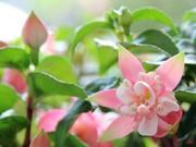 四季を味わう!やっぱり気になる。お花の写真