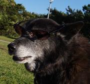 我の老犬介護の話を聞いてくれ