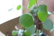 多肉と観葉植物を育てよう!増やそう!