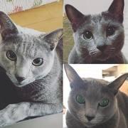ばあやのおさんぽ〜trois chats bleu