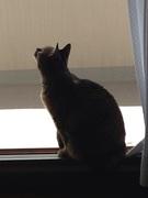 窓際にゃんこのゆるい終活