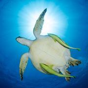 陽だまりかくれんぼ|水中写真家 上出俊作