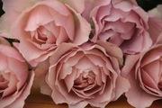 綺麗な花には棘があるかもしれない…
