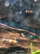 熱帯魚のある日常