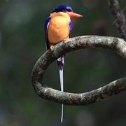 レッドドラゴンの鳥見旅行記