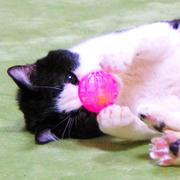 猫ブロ──ニコル & もっちゃん