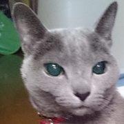 新「猫の細道」