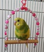 ROOM OF BIRD〜小鳥のお部屋〜