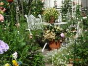 バラと宿根草の庭〜ペレ二アルガーデンを目指して〜