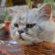 笹塚とネコと