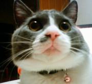 ふわふわ猫歴ねこ録