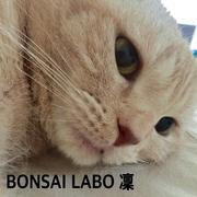 BONSAI-LABO(盆栽ラボ)凜 係の者の日記