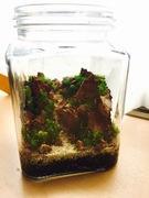 Aquabotanical Life