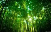 Mori@Forestのイロイロブログ