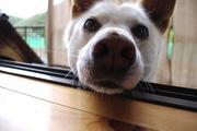 Animal Traveler 犬と猫を探して世界を歩いてみる
