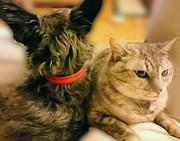 猫まんじゅう犬まんじゅう