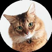 愛猫(めごねこ)