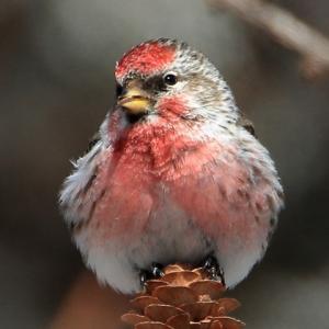 杜の都の鳥さん日記