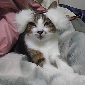 やっぱり猫がすき!!