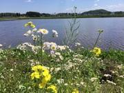春夏秋冬 / 老い楽の詩