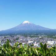 お茶と富士山とソーラーシェアリング