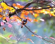 T/Hの野鳥写真-Ⅲ