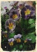 寄せ植え屋 風々緑花(ふうふうりょっか)のブログ