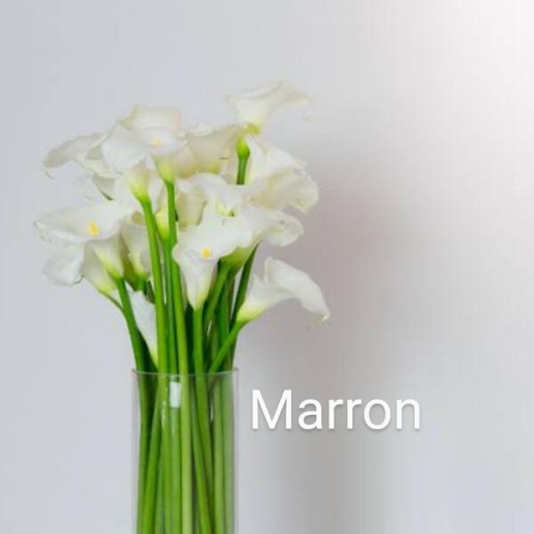 Marronさんのプロフィール