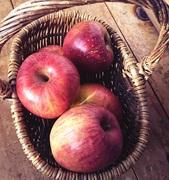 馬々とりんごの日々
