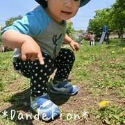 *Dandelion*