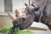動物園・水族館を訪ねて 魚類〜爬虫類〜哺乳類