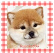 yomoko888さんのプロフィール
