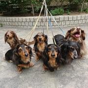 6ダックス家族
