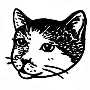 猫との暮らし 〜地域猫未満 地域猫 うちの猫〜