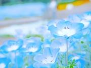 *photoblog*